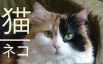 Dependendo do país e da região, alguns animais ocupam papéis diferentes nas escalas de valor das pessoas e das sociedades. Na cultura da sua cidade, as pessoas enxergam o gato com a mesma simpatia, ou há diferenças? A que se devem essas diferenças?